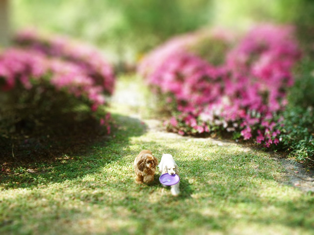 Tilt Shift Mini Pups