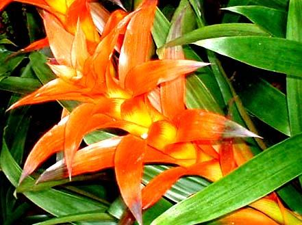 A flower in Kanapaha